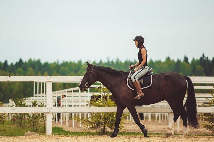 Po co potrzebne są skarpety jeździeckie?